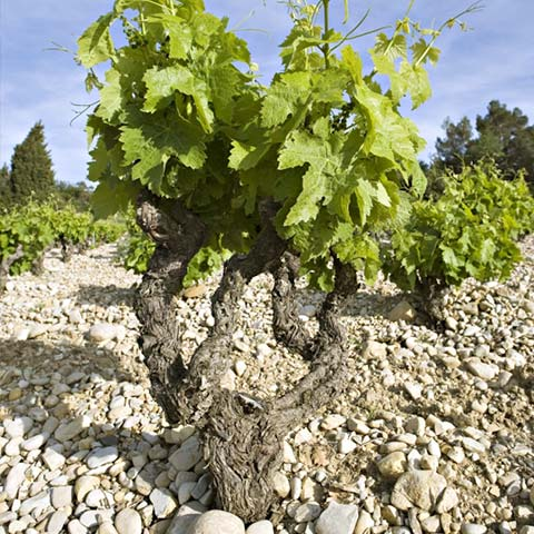 Steiniges Terroir