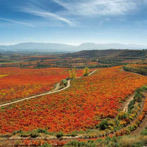 Ygay-Weinberge in Rioja