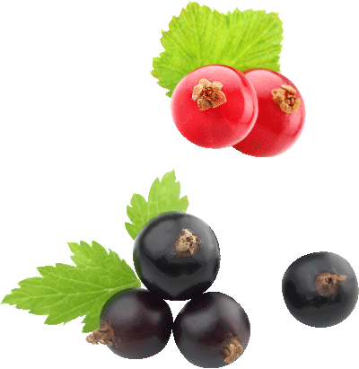 ... blackcurrant/cassis